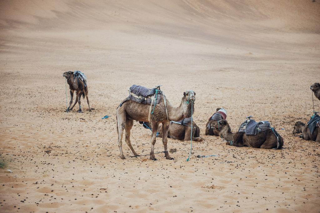Morocco Aiduke Photography blog - 169