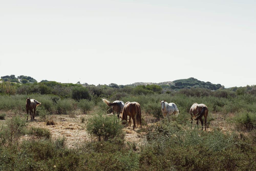 Sardegna blog 039