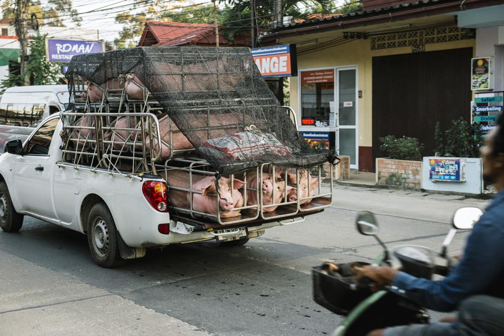 Tailandas 046